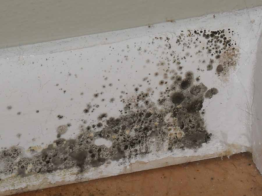 Mold Faq What Should I Know About In My Home